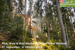 Pilze, Wald & Wild im Herbst 30.09.-03.10.2019