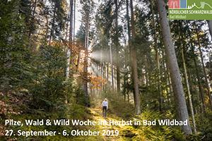Pilze, Wald & Wild im Herbst vom 03.10.-06.10.2019